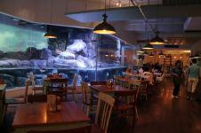 Di sini kamu bisa kerja dengan suasana bawah laut sambil ditemani hiu
