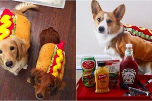 10 Potret anjing pakai kostum hot dog, bikin gemas
