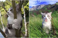 Selalu fotogenik saat dijepret, 10 pose kucing ini imut & menggemaskan