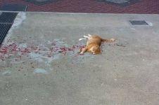 Dari jauh kondisi kucing ini menyedihkan, usai didekati jadi geregetan