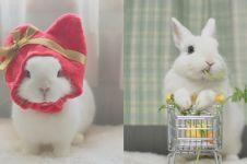 12 Potret Maron, kelinci cantik dengan mata yang indah banget