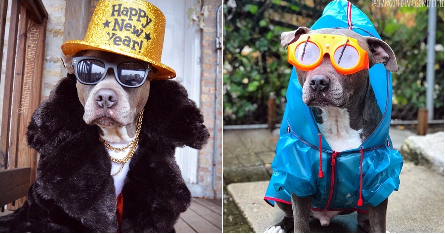 10 Potret Chango Leon, si anjing gaul yang swag abis