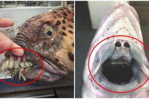 10 Hewan laut terjaring nelayan ini bentuknya ngeri banget
