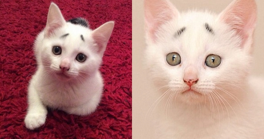 10 Potret Menggemaskan Gary Kucing Lucu Yang Ekspresinya Selalu