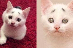 10 Potret menggemaskan Gary, kucing lucu yang ekspresinya selalu resah