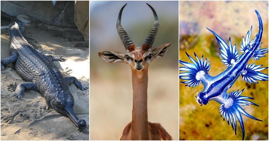 10 Hewan bak campuran spesies ini ternyata memang ada, sulit dipercaya
