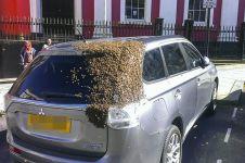 Kendarai mobil bersama ribuan lebah, aksi pria ini bikin takjub