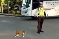 Aksi polisi stop kendaraan demi seberangkan kucing ini bikin haru