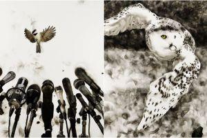 10 Lukisan ini dibuat dari api lho, indah dan dramatis