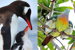 10 Potret menggemaskan induk burung bersama anak-anaknya