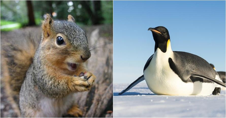 8 Binatang ini bisa 'berpuasa', ada yang tidak makan selama 3 bulan