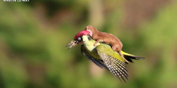 hewan menunggangi hewan lain ©oddee.com