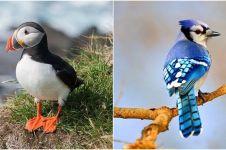 10 Jenis burung paling cantik dan diburu di dunia, mulai langka