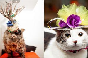 Begini penampilan unik 10 kucing jika hadiri pernikahan Harry-Meghan