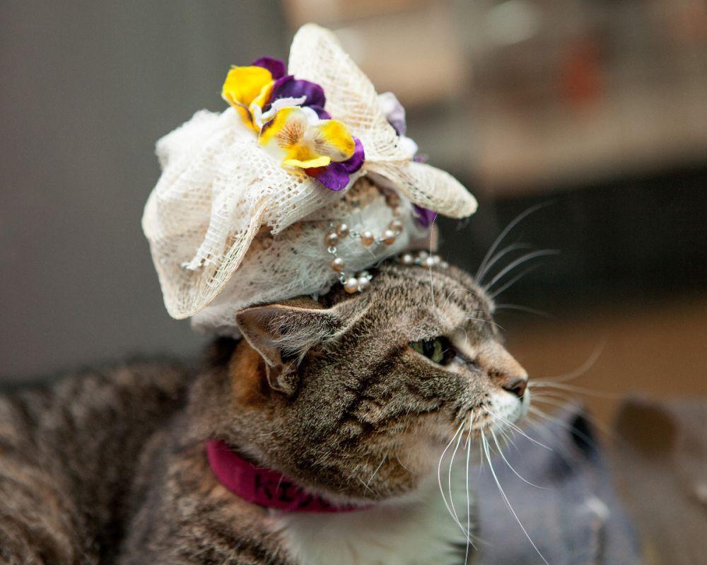 kucing jika hadir di royal wedding © 2018 brilio.net berbagai sumber