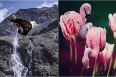 10 Gambar manipulasi hewan membaur dengan alam ini bikin susah kedip