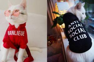 8 Potret Zappa The Cat, kucing imut yang suka bergaya ala street style
