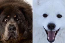 Jadi peliharaan, 5 hewan ini jati dirinya malah bikin terkejut