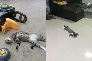 9 Tingkah kocak kucing tiru aktivitas manusia, lucunya bikin meong