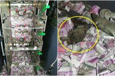 Bukan dirampok, uang Rp 253 juta dalam ATM ini habis digerogoti tikus