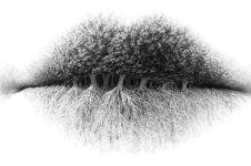 Bibir, pohon atau akar? Objek pertama yang kamu lihat ungkap pribadimu