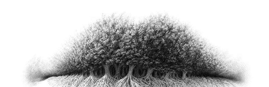 bibir, pohon atau akar © Twitter/@Hyggelig16