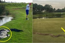10 Momen satwa liar tiba-tiba muncul saat turnamen golf, bikin ngeri