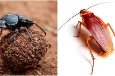 7 Serangga paling pintar di dunia, bisa menari hingga paham navigasi