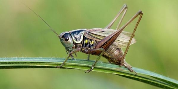 serangga paling pintar di dunia  © 2018 brilio.net