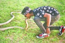 8 Aksi berbahaya Risky dengan king kobra, sebelum ular itu membunuhnya