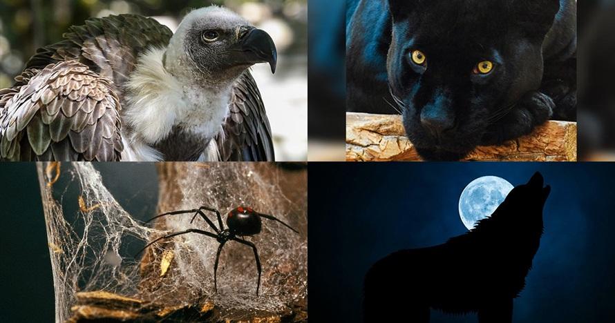 Pilih 1 dari 5 hewan ini, hasilnya bisa ungkap sisi gelap dirimu