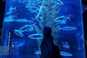 Wahana akuarium raksasa ini bisa hadirkan sensasi jelajah bawah laut