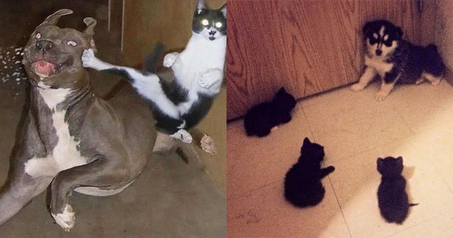 10 Foto bukti anjing dan kucing nggak pernah akur, Tom and Jerry nih?