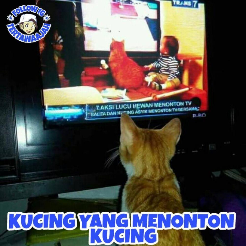 8 Meme Jika Kucing Jadi Manusia Ini Ulahnya Ngegemesin