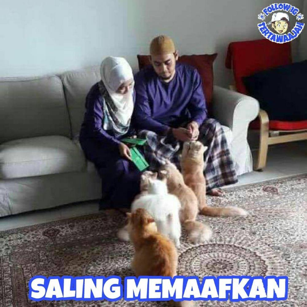 tingkah lucu kucing © 2018 berbagai sumber
