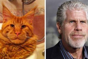 10 Pose kucing tiru berbagai ekspresi ini bikin gemes sendiri