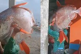 Nelayan ini emoh jual ikan jumbo tangkapannya, alasannya bikin melongo
