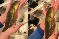 Sempat dikira ikan, setelah diteliti hewan ini bikin ilmuwan terkejut