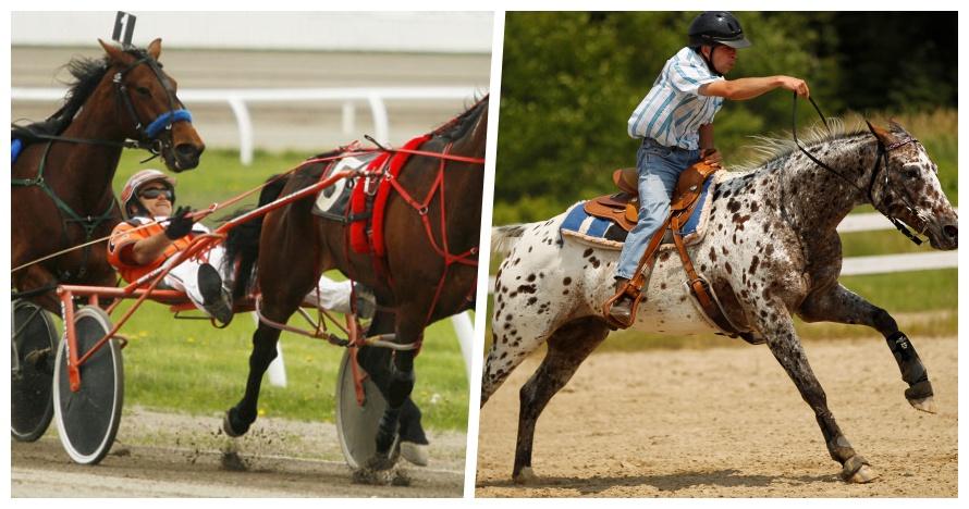 Bukan sembarang kuda, ini 5 ras yang paling bisa diandalkan buat lomba