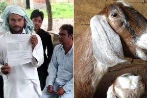 Dari memperkosa hingga menikahi, ini 4 tindakan aneh manusia ke hewan