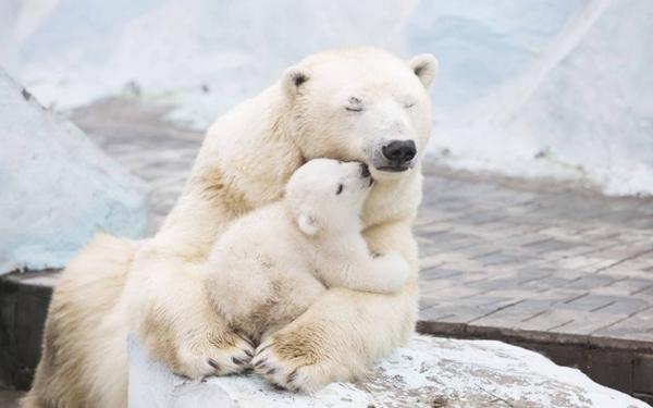 fenomena jika es di kutub mencair  © 2018 brilio.net