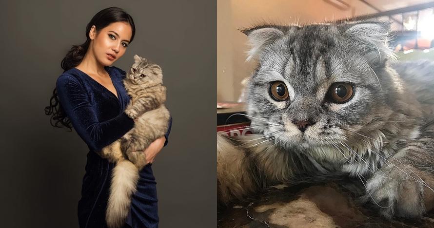 Kucing 5 seleb ini hits banget, tak kalah populer dari pemiliknya