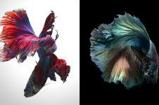 Cewek ini potret ikan cupang konsep monokrom, 10 hasilnya kece abis