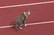 Kocak, kucing ini ikut Asian Games cabang atletik di Stadion Utama GBK