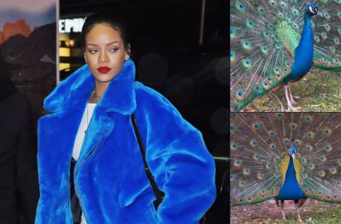 10 Cocoklogi Rihanna bergaun nyentrik dengan burung, bikin cekikikan