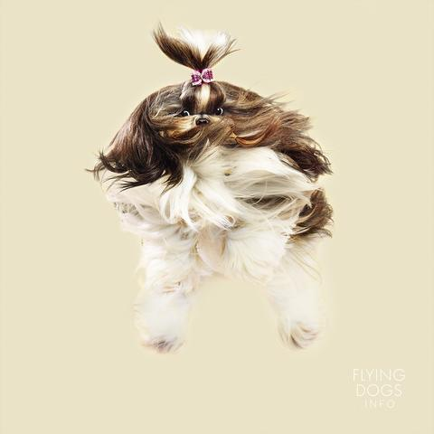 anjing terbang julia © flyingdogs.info