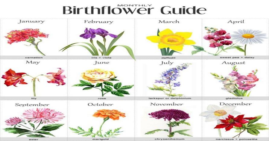 12 Jenis bunga ini bisa representasikan kepribadian sesuai bulan lahir