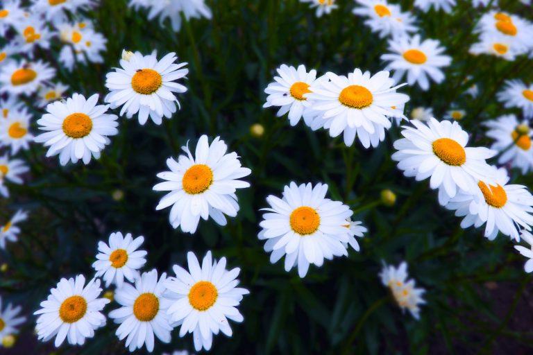 bunga lahir Istimewa