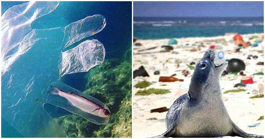 Baru lagi, 10 foto ini buktikan sampah bisa bikin hewan laut merana