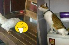 10 Tingkah hewan ini konyolnya minta ampun, mau KZL tapi bikin ketawa